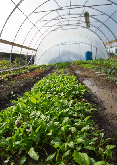 Central Roots Farm Hoop House