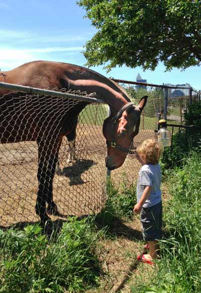 Mather Taseff pets a horse on a visit to the Cleveland Mounted Police station - photo Ashley Taseff