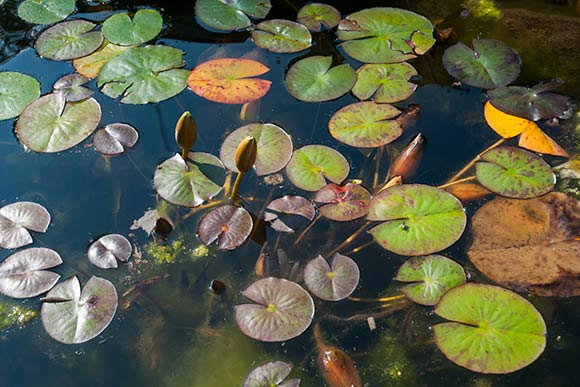 A pond gurgles under a delicate web of water lilies at the Watershed Stewardship Center