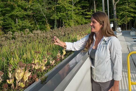 Jennifer Grieser, Metroparks' senior natural resources area manager for urban watersheds admiring the green roof
