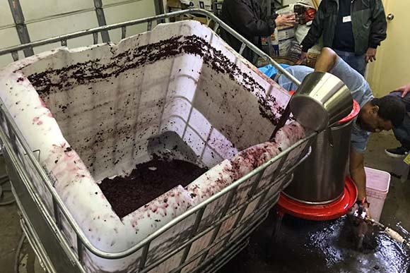 Sangiovese pressing at North Coast Wine Club