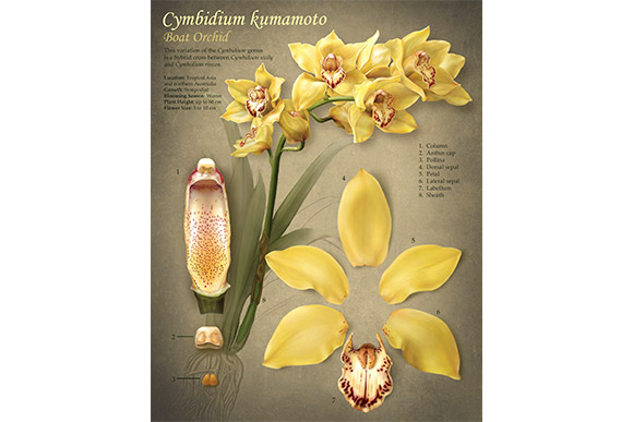 "Rebecca Konte's orchid specimen piece from the Cleveland Botanical Garden's ""Orchid Mania"" exhibition"