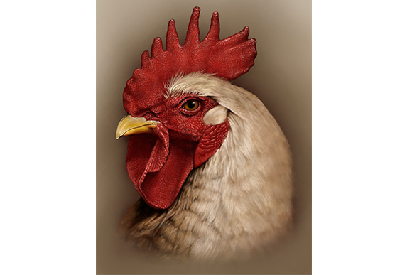 Rooster Study by Rebecca Konte is an example of the wildlife art she enjoys creating to utilize and develop her artistic abilities
