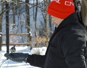 Hand feeding the chickadees