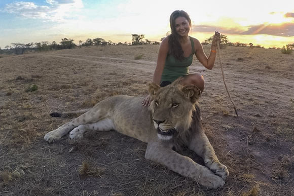Lindsay on a lion walk through the ALERT program at Antelope Park in Zimbabwe