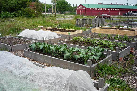Urban farms: small but mighty