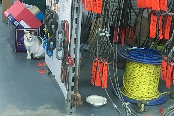 Gracie keeps watch at Samsel Supply