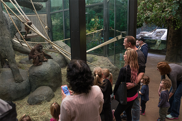 Checking out the Orangutans at the Metroparks Zoo RainForest