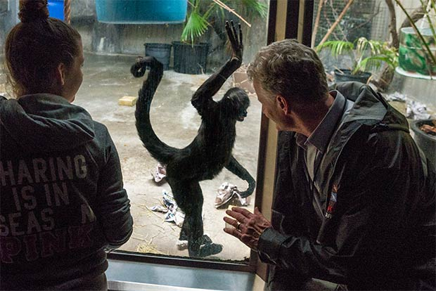 A Spider Monkey recognizes curator Tad Schoffner and comes in for a high five