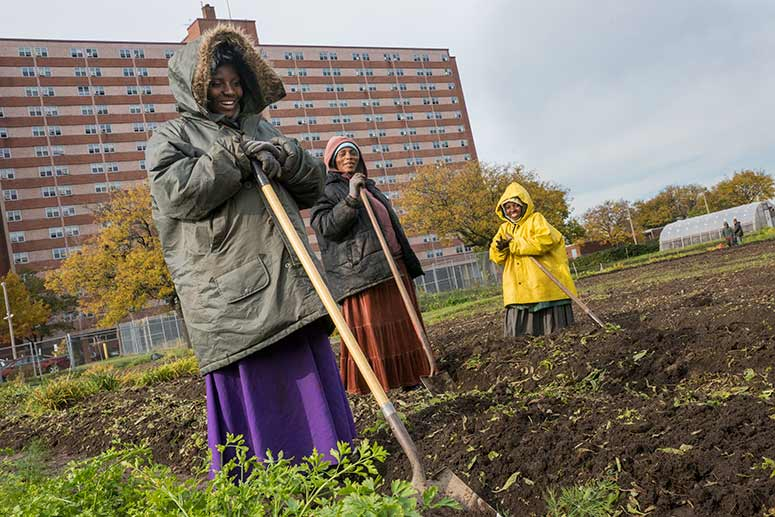 Ohio City Farm�s workers from The Refugee Empowerment Agricultural Program