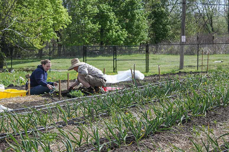 A neighborhood in bloom: Kinsman residents plant the seeds for ...