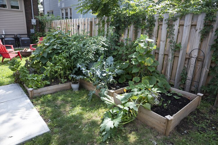 Dane and Todd's backyard garden