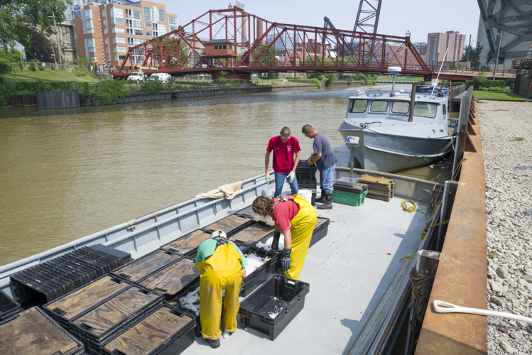 Unloading fish at Catanese Classic Seafood on the river
