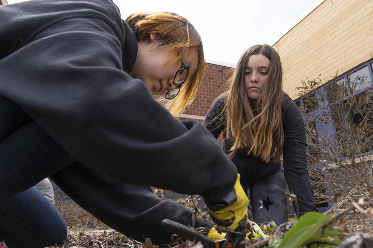 A'Layna Nettles, a senior at Cleveland Central Catholic High School, pulls weeds with her fellow YFDC participant