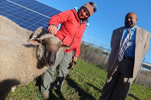 CMHA�s CEO Jeffery Patterson and landscape assistant Amanda Block greet the sheep