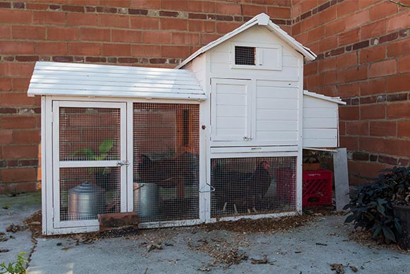 Chicken coop at at EDWINS Campus