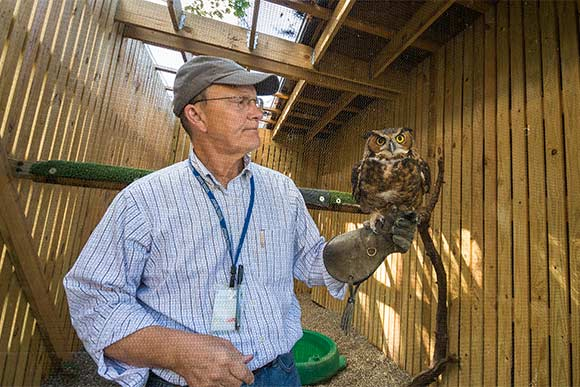 Harvey Webster, CMNH director of wildlife resources with one of the great horned owls