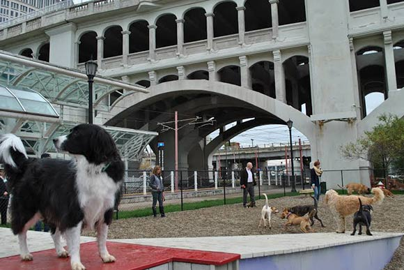 The Downtown Dog Park